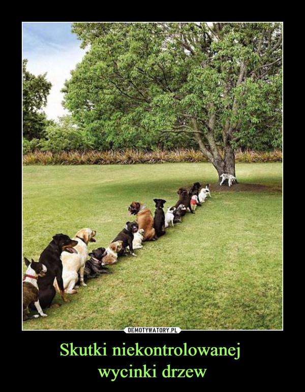 Skutki niekontrolowanej wycinki drzew –