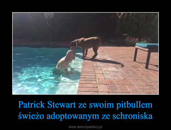 Patrick Stewart ze swoim pitbullem świeżo adoptowanym ze schroniska –