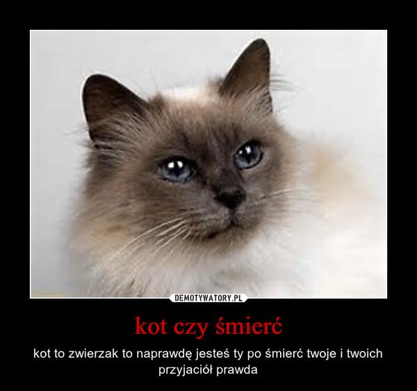 kot czy śmierć – kot to zwierzak to naprawdę jesteś ty po śmierć twoje i twoich przyjaciół prawda