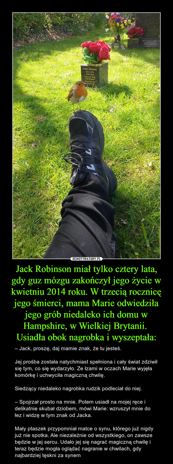 Jack Robinson miał tylko cztery lata, gdy guz mózgu zakończył jego życie w kwietniu 2014 roku. W trzecią rocznicę jego śmierci, mama Marie odwiedziła jego grób niedaleko ich domu w Hampshire, w Wielkiej Brytanii. Usiadła obok nagrobka i wyszeptała: – – Jack, proszę, daj mamie znak, że tu jesteś.Jej prośba została natychmiast spełniona i cały świat zdziwił się tym, co się wydarzyło. Ze łzami w oczach Marie wyjęła komórkę i uchwyciła magiczną chwilę.Siedzący niedaleko nagrobka rudzik podleciał do niej.– Spojrzał prosto na mnie. Potem usiadł na mojej ręce i delikatnie skubał dziobem, mówi Marie: wzruszył mnie do łez i widzę w tym znak od Jacka.Mały ptaszek przypomniał matce o synu, którego już nigdy już nie spotka. Ale niezależnie od wszystkiego, on zawsze będzie w jej sercu. Udało jej się nagrać magiczną chwilę i teraz będzie mogła oglądać nagranie w chwilach, gdy najbardziej tęskni za synem