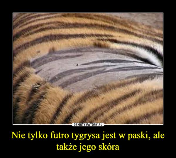 Nie tylko futro tygrysa jest w paski, ale także jego skóra –