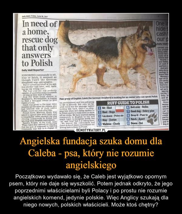 Angielska fundacja szuka domu dla Caleba - psa, który nie rozumie angielskiego – Początkowo wydawało się, że Caleb jest wyjątkowo opornym psem, który nie daje się wyszkolić. Potem jednak odkryto, że jego poprzednimi właścicielami byli Polacy i po prostu nie rozumie angielskich komend, jedynie polskie. Więc Anglicy szukają dla niego nowych, polskich właścicieli. Może ktoś chętny? In need of a home, rescue dog that only answers to Polish