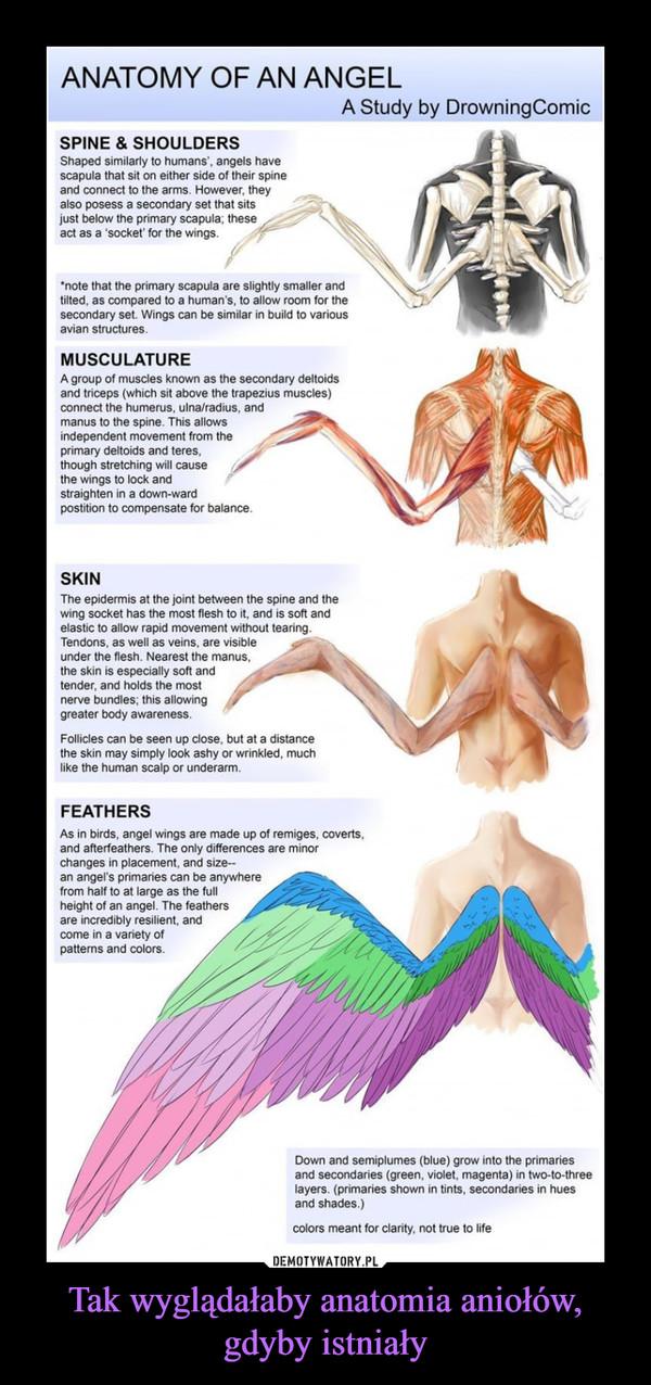 Tak wyglądałaby anatomia aniołów, gdyby istniały –