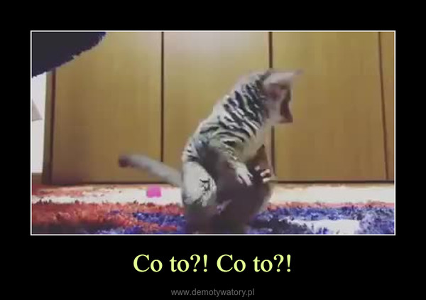 Co to?! Co to?! –