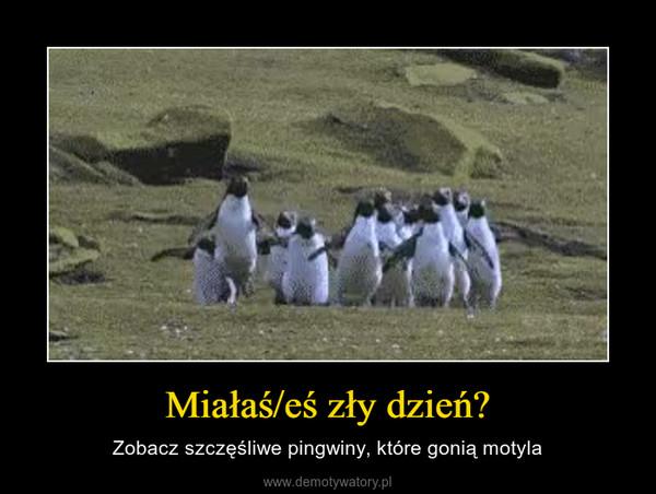 Miałaś/eś zły dzień? – Zobacz szczęśliwe pingwiny, które gonią motyla
