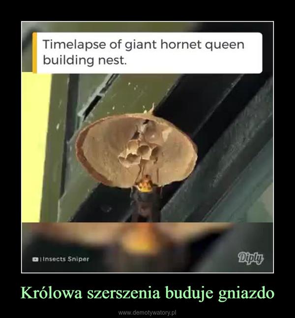 Królowa szerszenia buduje gniazdo –