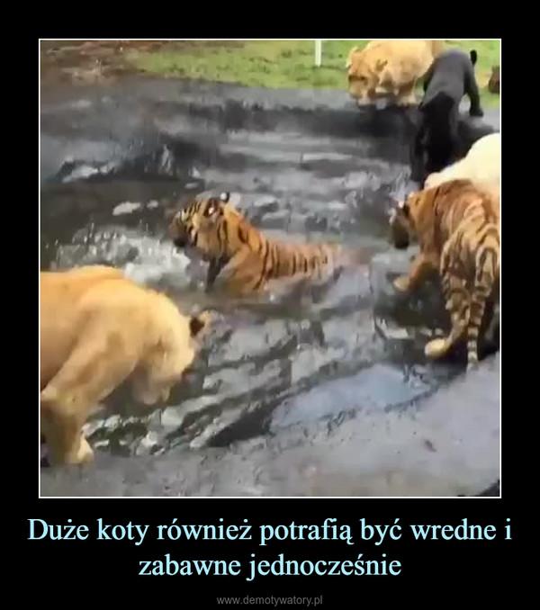 Duże koty również potrafią być wredne i zabawne jednocześnie –