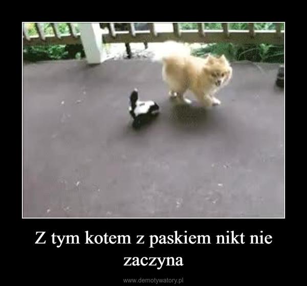 Z tym kotem z paskiem nikt nie zaczyna –