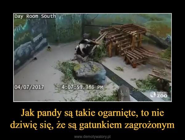 Jak pandy są takie ogarnięte, to nie dziwię się, że są gatunkiem zagrożonym –