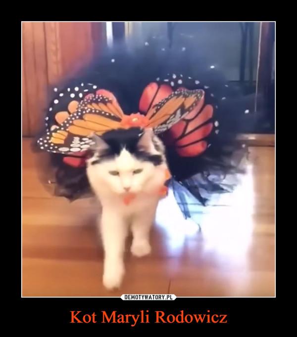 Kot Maryli Rodowicz –