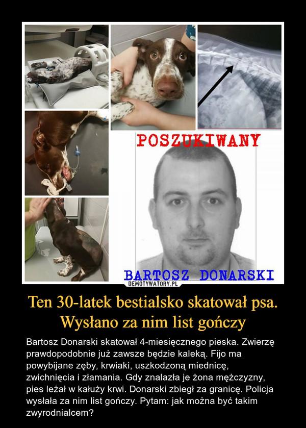 Ten 30-latek bestialsko skatował psa. Wysłano za nim list gończy – Bartosz Donarski skatował 4-miesięcznego pieska. Zwierzę prawdopodobnie już zawsze będzie kaleką. Fijo ma powybijane zęby, krwiaki, uszkodzoną miednicę, zwichnięcia i złamania. Gdy znalazła je żona mężczyzny, pies leżał w kałuży krwi. Donarski zbiegł za granicę. Policja wysłała za nim list gończy. Pytam: jak można być takim zwyrodnialcem? Poszukiwany Bartosz Donarski