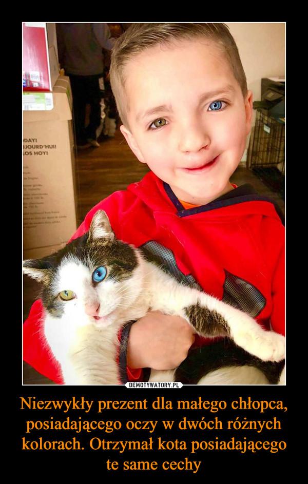 Niezwykły prezent dla małego chłopca, posiadającego oczy w dwóch różnych kolorach. Otrzymał kota posiadającego te same cechy –