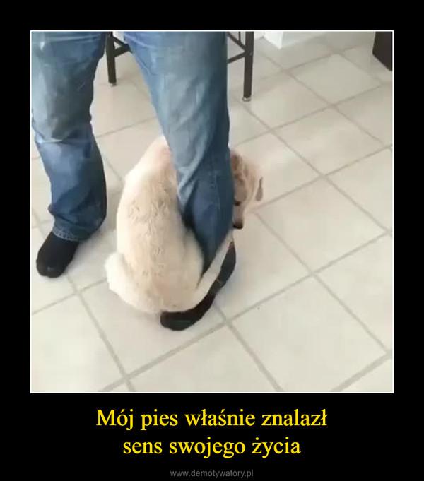 Mój pies właśnie znalazłsens swojego życia –