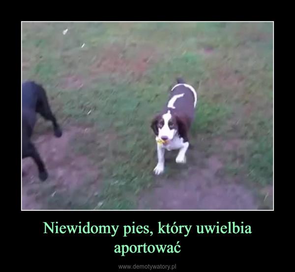 Niewidomy pies, który uwielbia aportować –