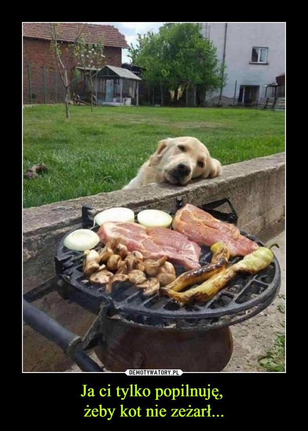 Ja ci tylko popilnuję, żeby kot nie zeżarł... –