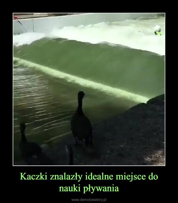 Kaczki znalazły idealne miejsce do nauki pływania –