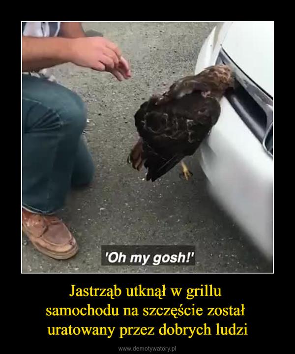 Jastrząb utknął w grillu samochodu na szczęście został uratowany przez dobrych ludzi –