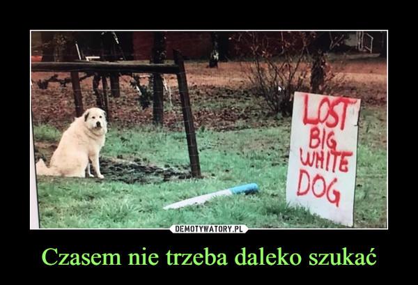 Czasem nie trzeba daleko szukać –  LOST BIG WHITE DOG