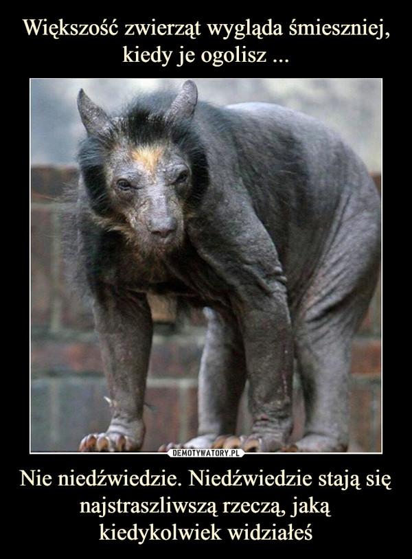 Nie niedźwiedzie. Niedźwiedzie stają się najstraszliwszą rzeczą, jaką kiedykolwiek widziałeś –