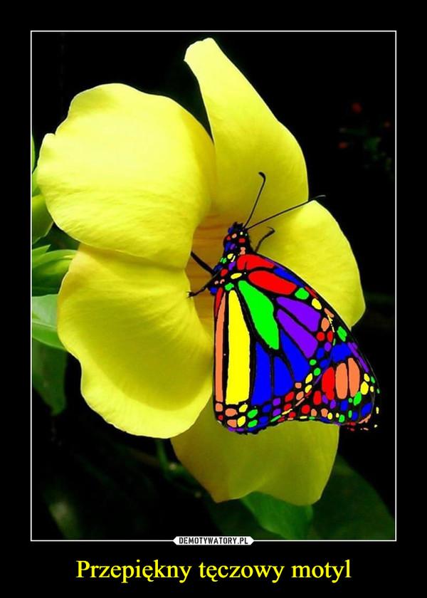 Przepiękny tęczowy motyl –
