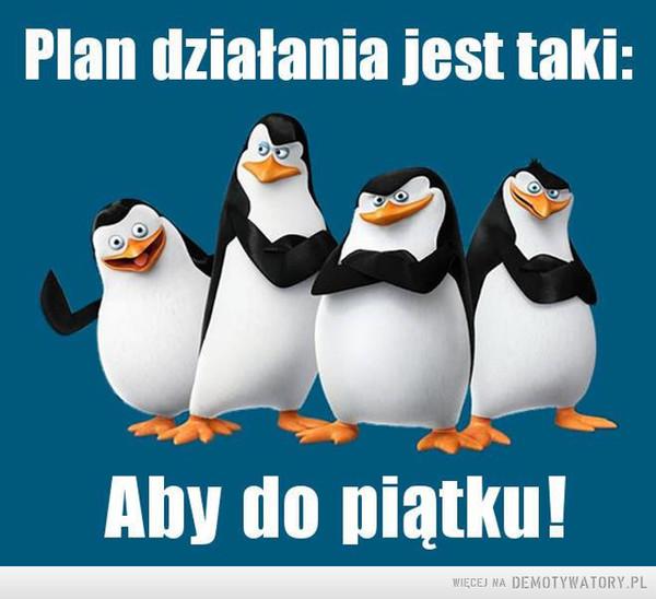 Plan działania –  Plan działania jest taki: Aby do piątku!