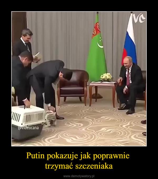 Putin pokazuje jak poprawnie trzymać szczeniaka –