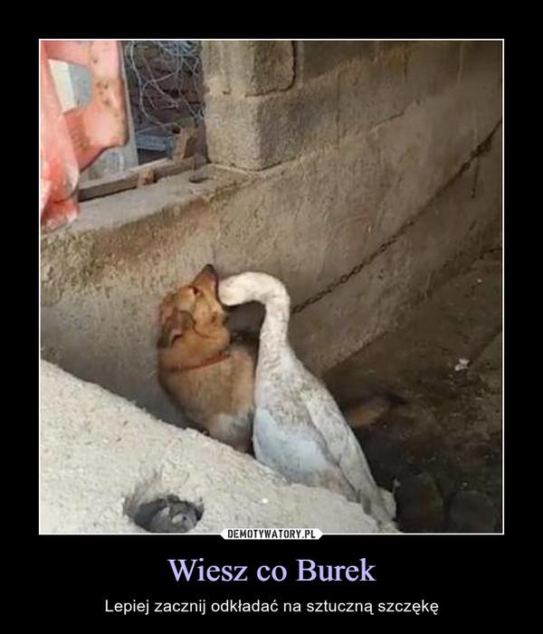 Wiesz co Burek – Lepiej zacznij odkładać na sztuczną szczękę