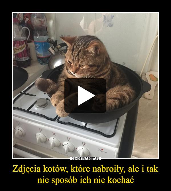 Zdjęcia kotów, które nabroiły, ale i tak nie sposób ich nie kochać –