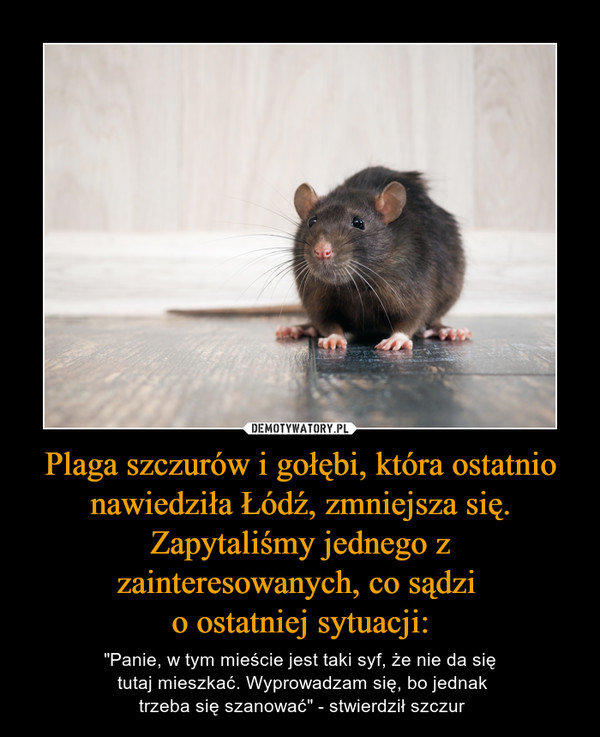 """Plaga szczurów i gołębi, która ostatnio nawiedziła Łódź, zmniejsza się. Zapytaliśmy jednego z zainteresowanych, co sądzi o ostatniej sytuacji: – """"Panie, w tym mieście jest taki syf, że nie da się tutaj mieszkać. Wyprowadzam się, bo jednak trzeba się szanować"""" - stwierdził szczur"""