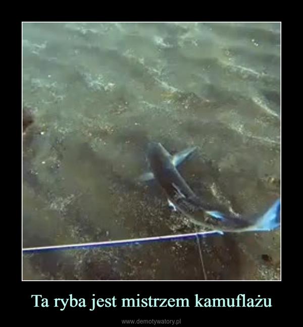 Ta ryba jest mistrzem kamuflażu –