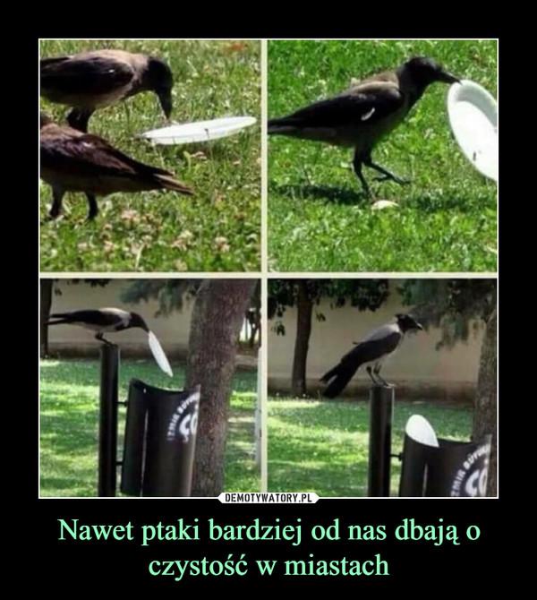 Nawet ptaki bardziej od nas dbają o czystość w miastach –