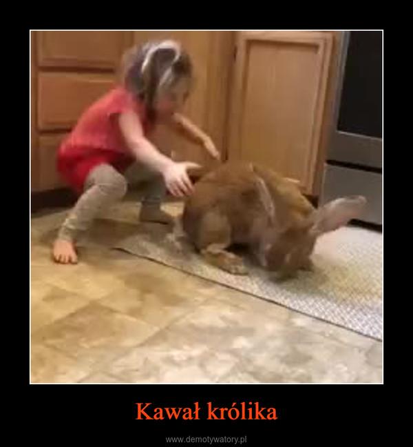 Kawał królika –