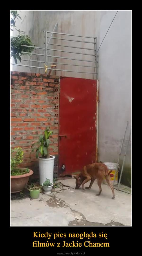 Kiedy pies naogląda się filmów z Jackie Chanem –