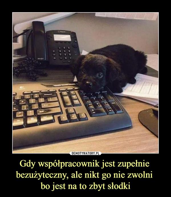 Gdy współpracownik jest zupełnie bezużyteczny, ale nikt go nie zwolni bo jest na to zbyt słodki –