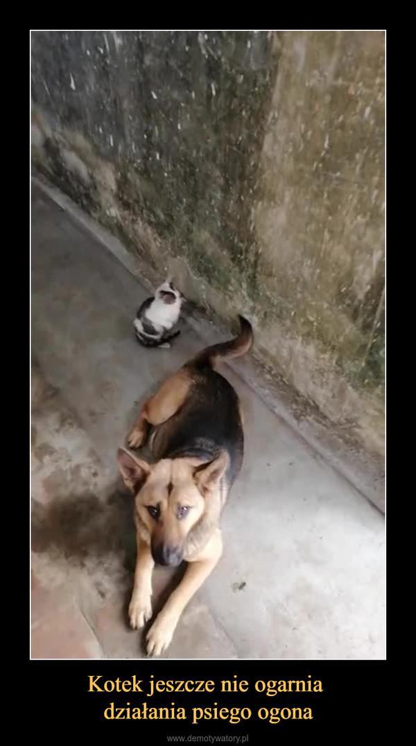 Kotek jeszcze nie ogarnia działania psiego ogona –
