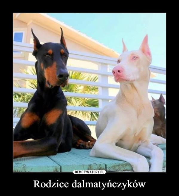 Rodzice dalmatyńczyków –