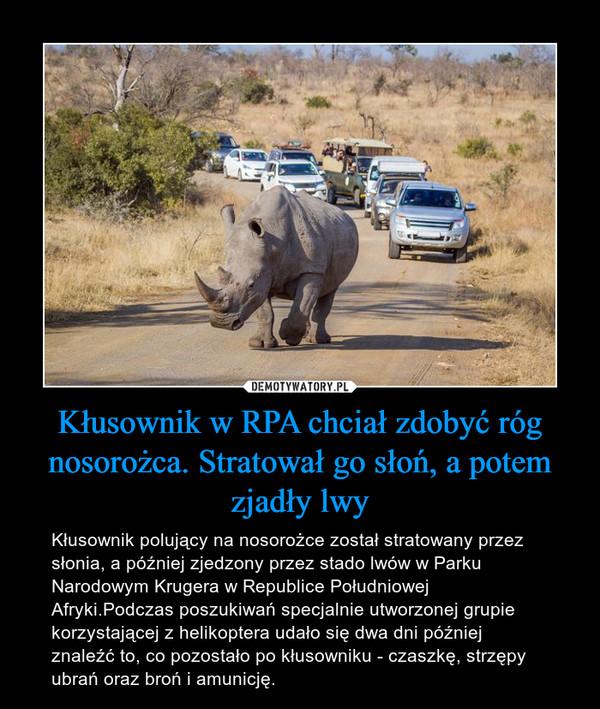 Kłusownik w RPA chciał zdobyć róg nosorożca. Stratował go słoń, a potem zjadły lwy – Kłusownik polujący na nosorożce został stratowany przez słonia, a później zjedzony przez stado lwów w Parku Narodowym Krugera w Republice Południowej Afryki.Podczas poszukiwań specjalnie utworzonej grupie korzystającej z helikoptera udało się dwa dni później znaleźć to, co pozostało po kłusowniku - czaszkę, strzępy ubrań oraz broń i amunicję.