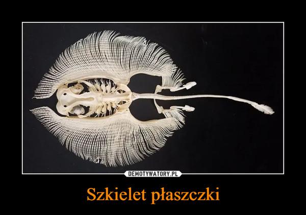 Szkielet płaszczki –