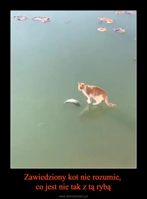 Zawiedziony kot nie rozumie, co jest nie tak z tą rybą –