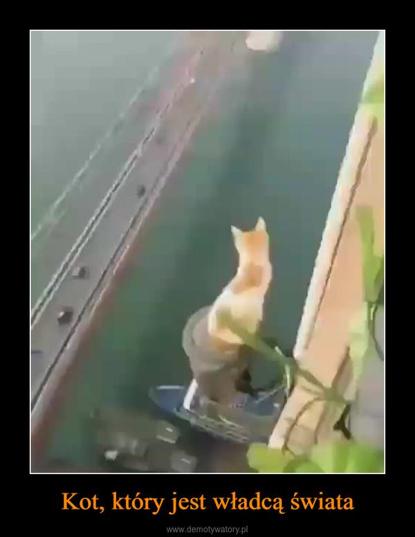 Kot, który jest władcą świata –