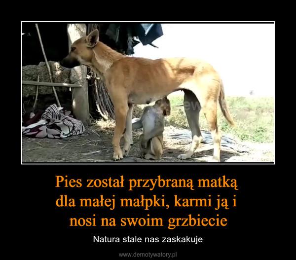 Pies został przybraną matką dla małej małpki, karmi ją i nosi na swoim grzbiecie – Natura stale nas zaskakuje