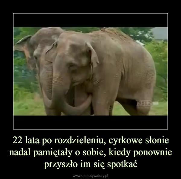 22 lata po rozdzieleniu, cyrkowe słonie nadal pamiętały o sobie, kiedy ponownie przyszło im się spotkać –