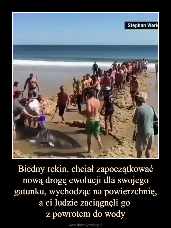 Biedny rekin, chciał zapoczątkować nową drogę ewolucji dla swojego gatunku, wychodząc na powierzchnię,a ci ludzie zaciągnęli go z powrotem do wody –