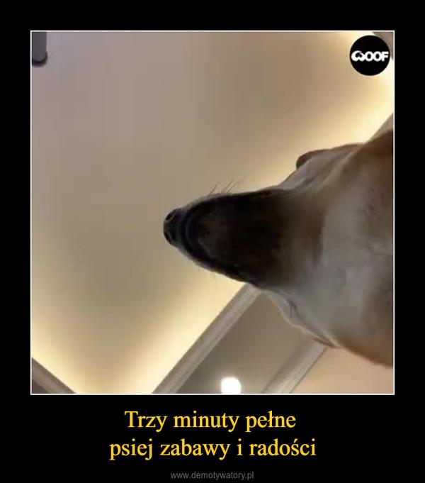 Trzy minuty pełne psiej zabawy i radości –