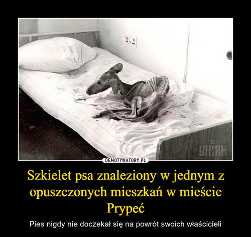 Szkielet psa znaleziony w jednym z opuszczonych mieszkań w mieście Prypeć