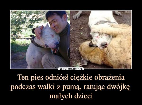 Ten pies odniósł ciężkie obrażenia podczas walki z pumą, ratując dwójkę  małych dzieci –