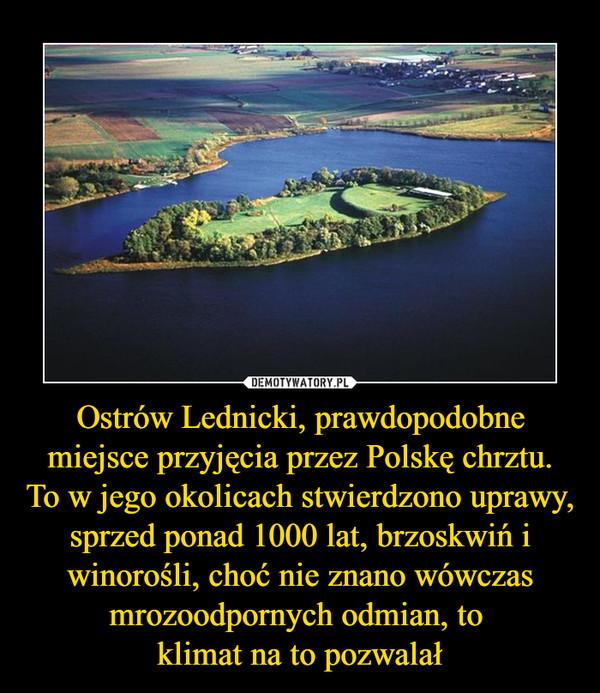 Ostrów Lednicki, prawdopodobne miejsce przyjęcia przez Polskę chrztu.To w jego okolicach stwierdzono uprawy, sprzed ponad 1000 lat, brzoskwiń i winorośli, choć nie znano wówczas mrozoodpornych odmian, to klimat na to pozwalał –