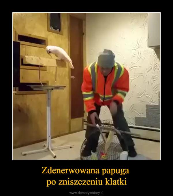 Zdenerwowana papuga po zniszczeniu klatki –