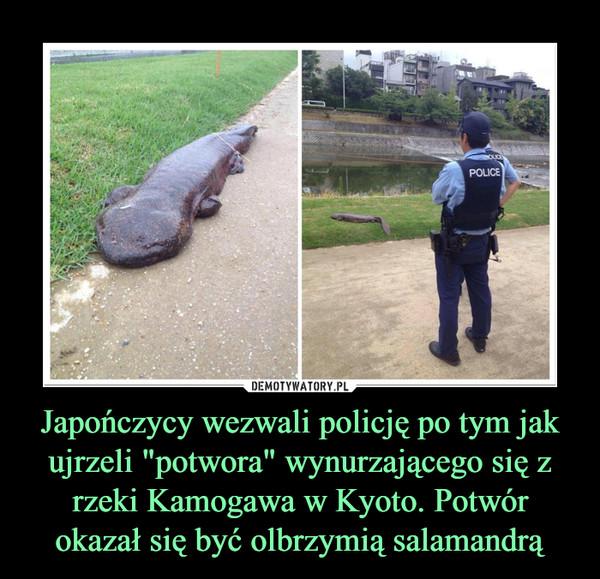 """Japończycy wezwali policję po tym jak ujrzeli """"potwora"""" wynurzającego się z rzeki Kamogawa w Kyoto. Potwór okazał się być olbrzymią salamandrą –"""