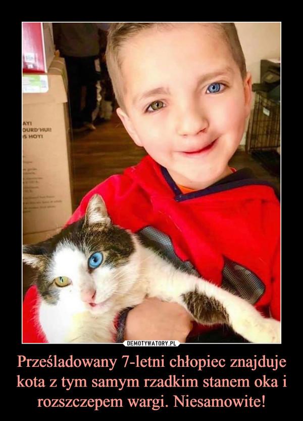 Prześladowany 7-letni chłopiec znajduje kota z tym samym rzadkim stanem oka i rozszczepem wargi. Niesamowite! –